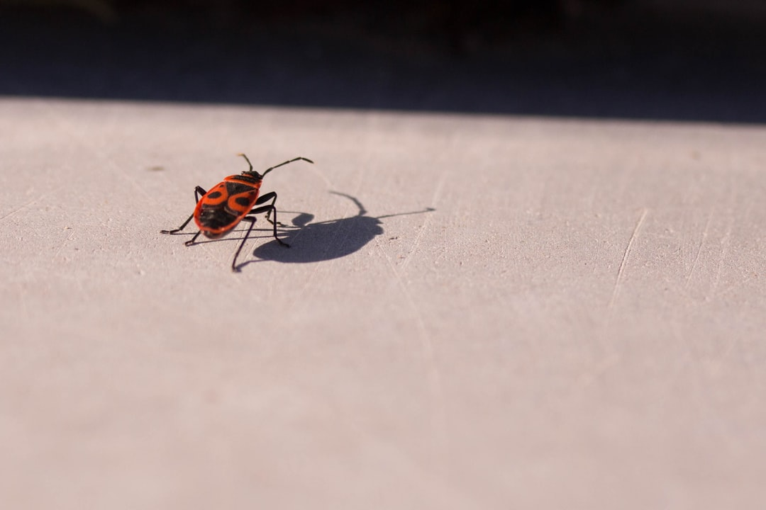 Different Types of Bugs and Pests (And How to Spot Them!)