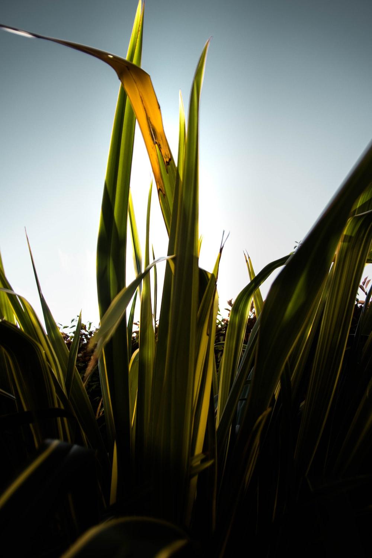 green leaf plant under blue sky during daytime