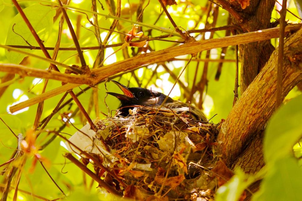 black bird on brown nest