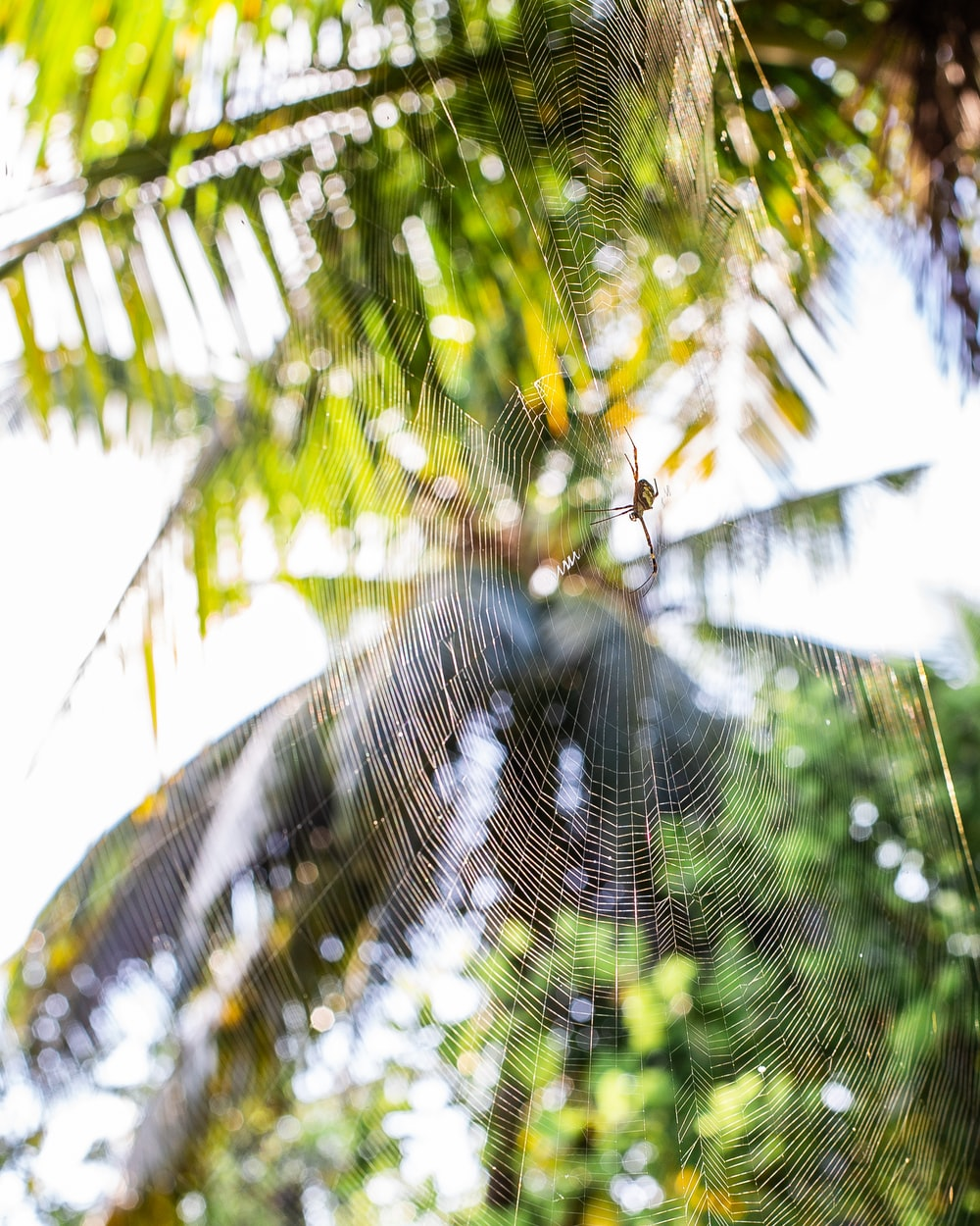 spider web on green leaf tree during daytime