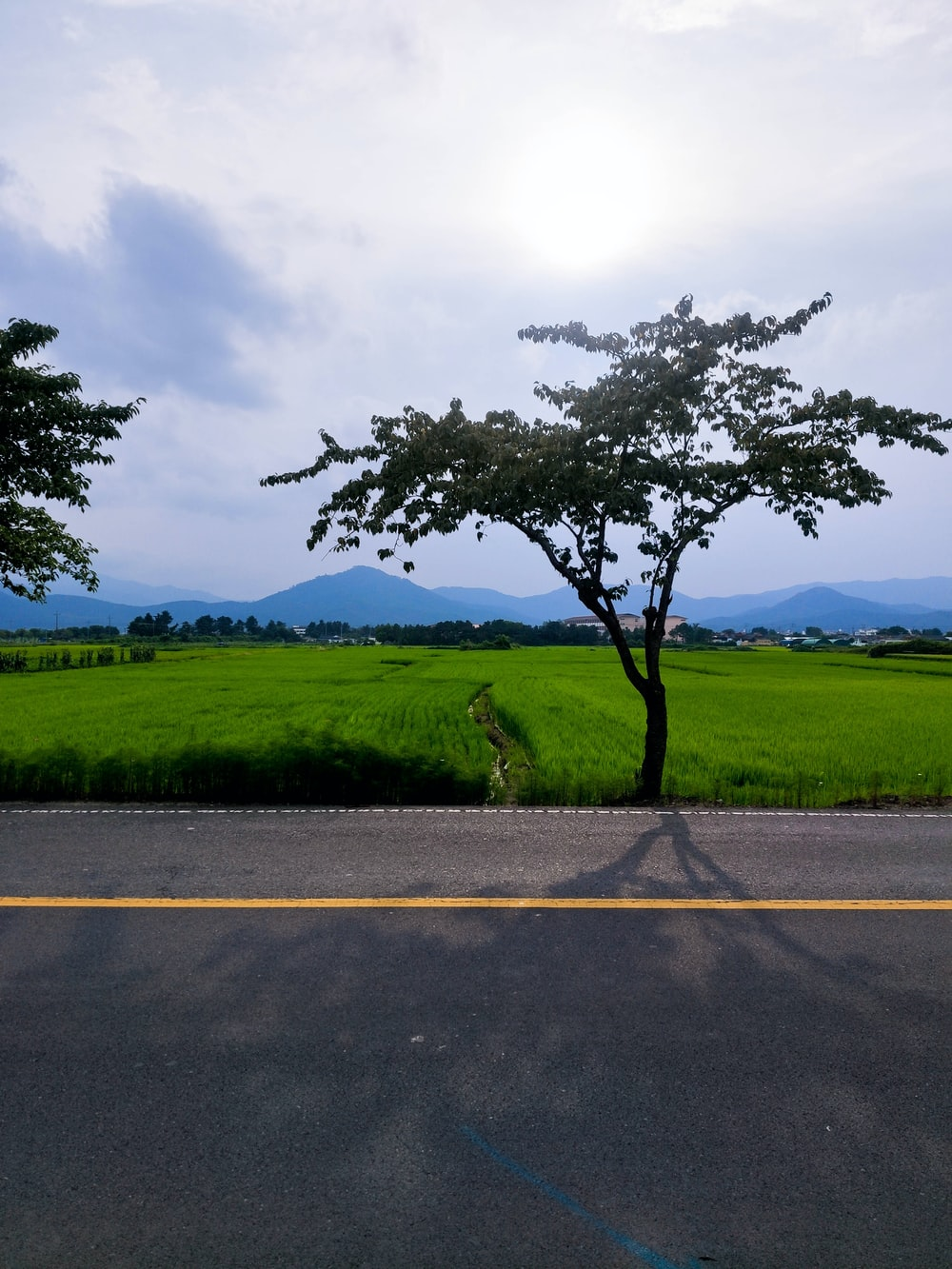 green grass field near road