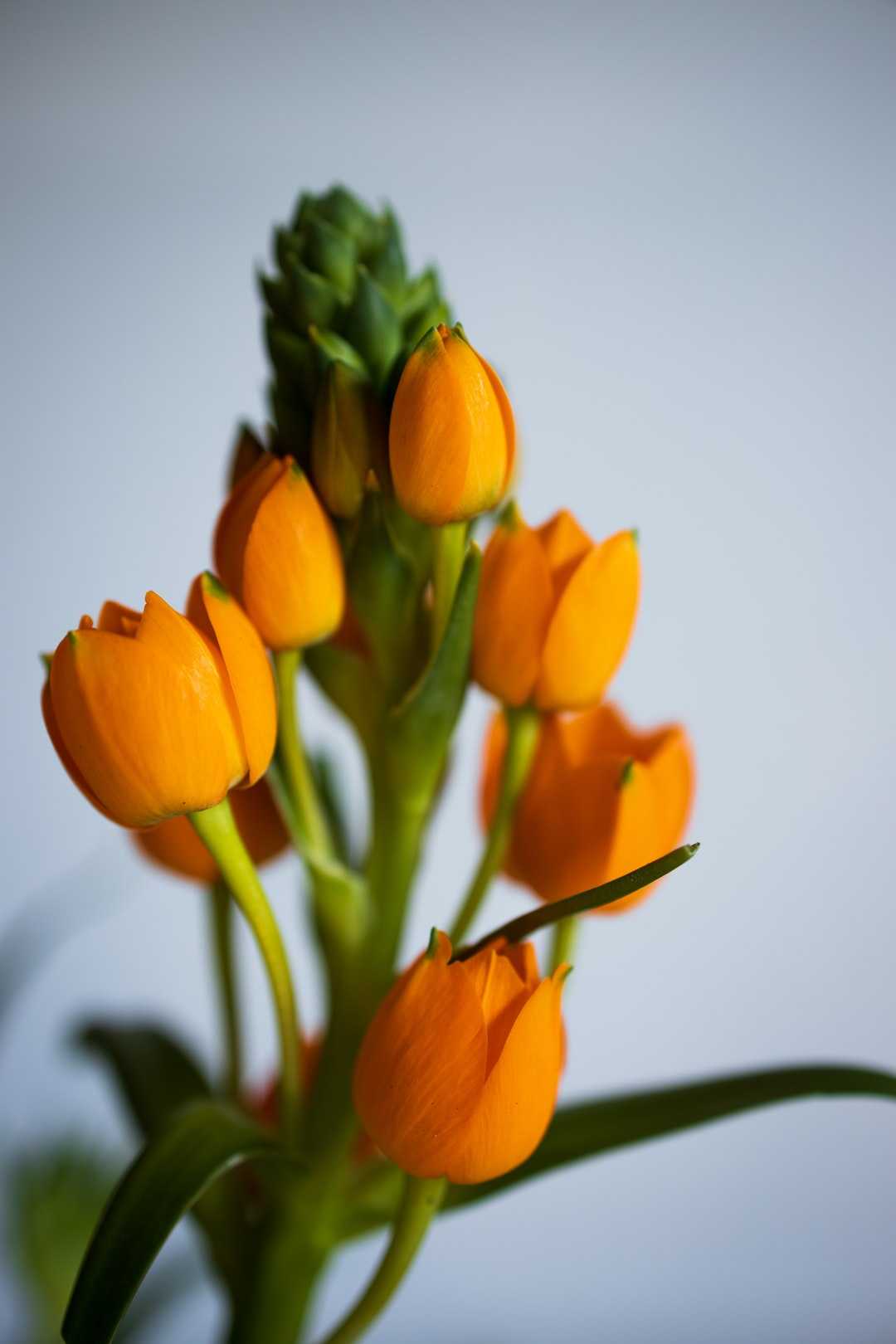 Orange star flowers.