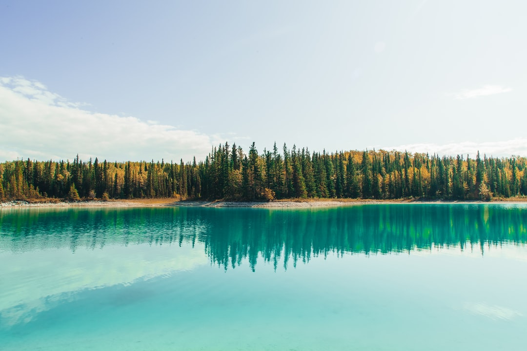 Green Trees Beside Body of Water During Daytime - unsplash