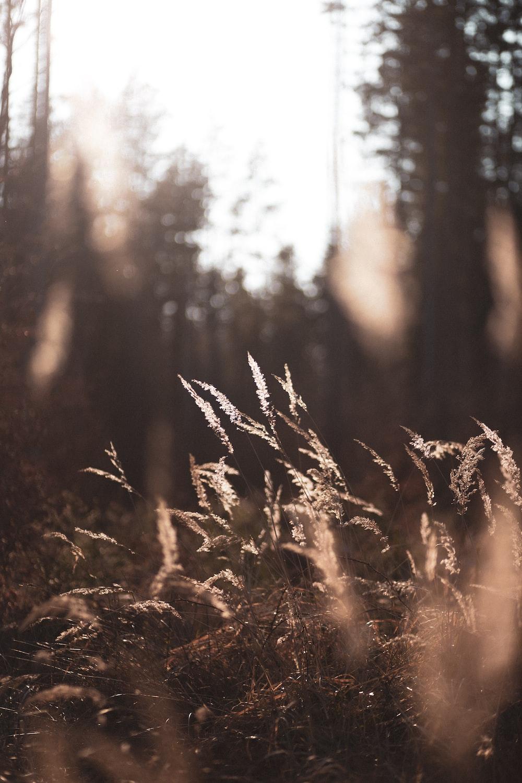 brown grass on brown soil during daytime