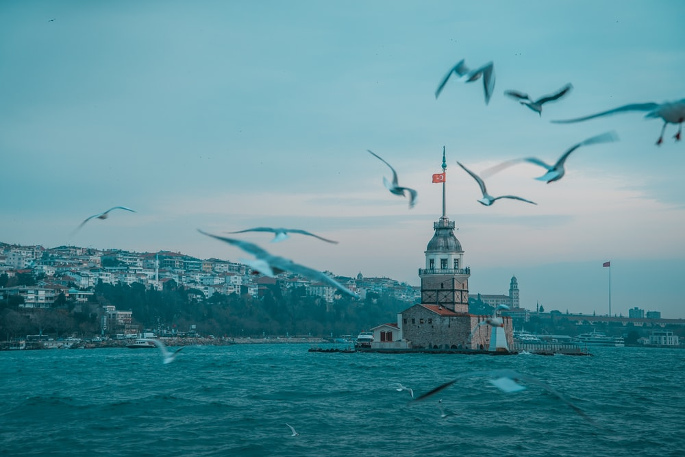 birds flying over the city by the sea during daytime