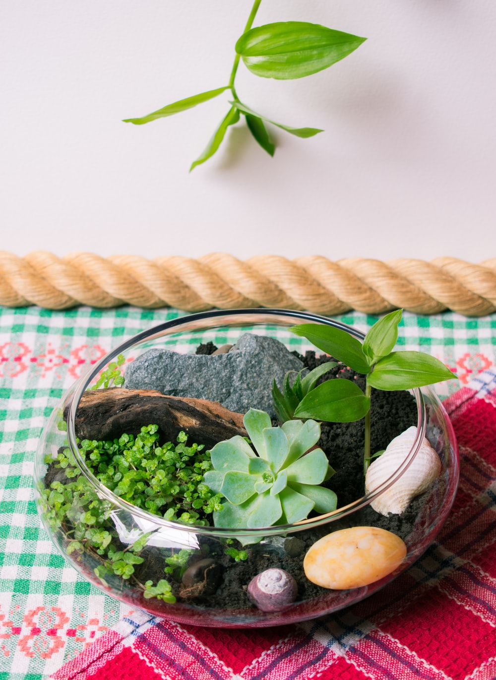 green plant in clear glass bowl