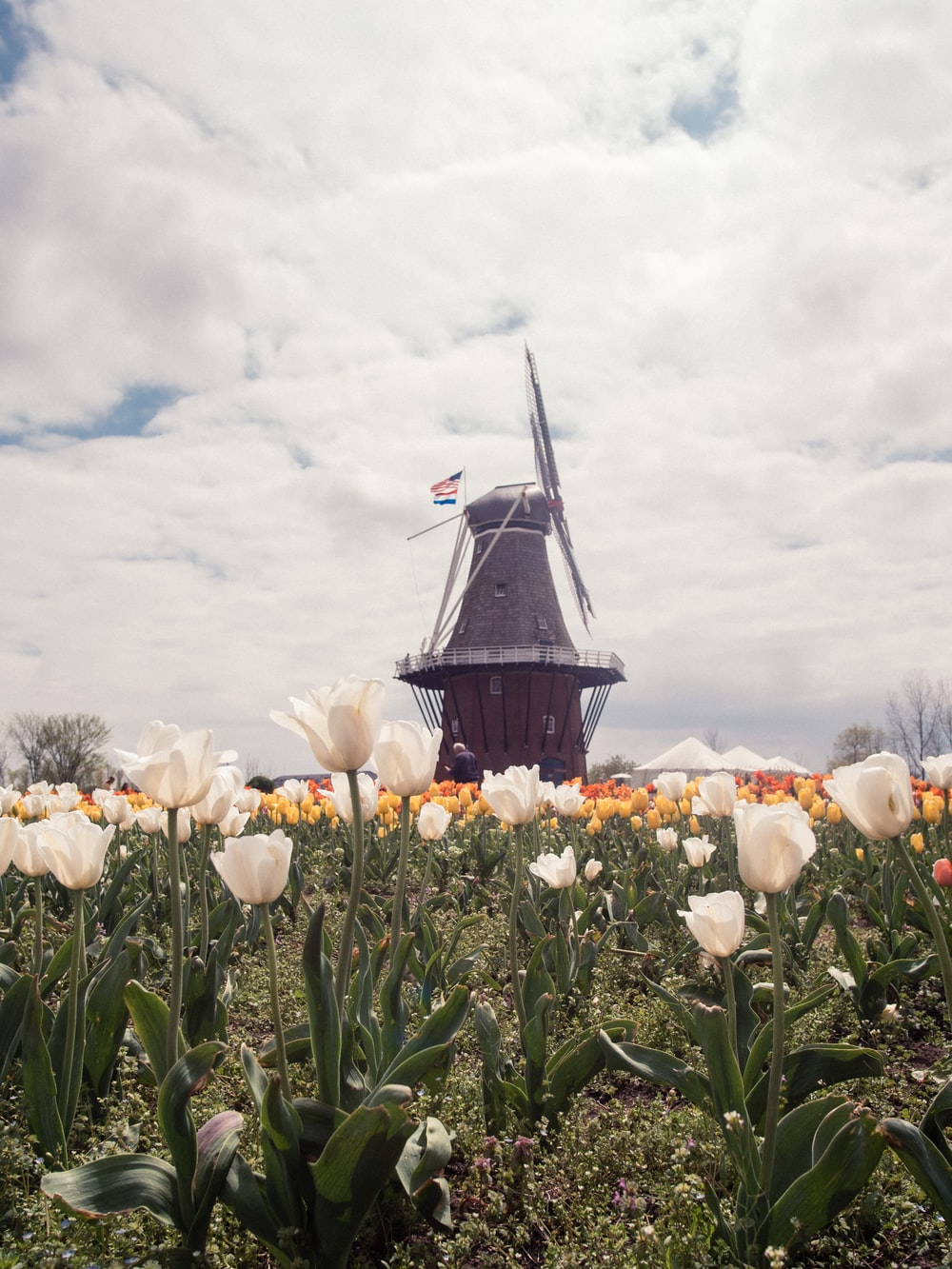black and brown windmill surrounded by green plants under white clouds during daytime
