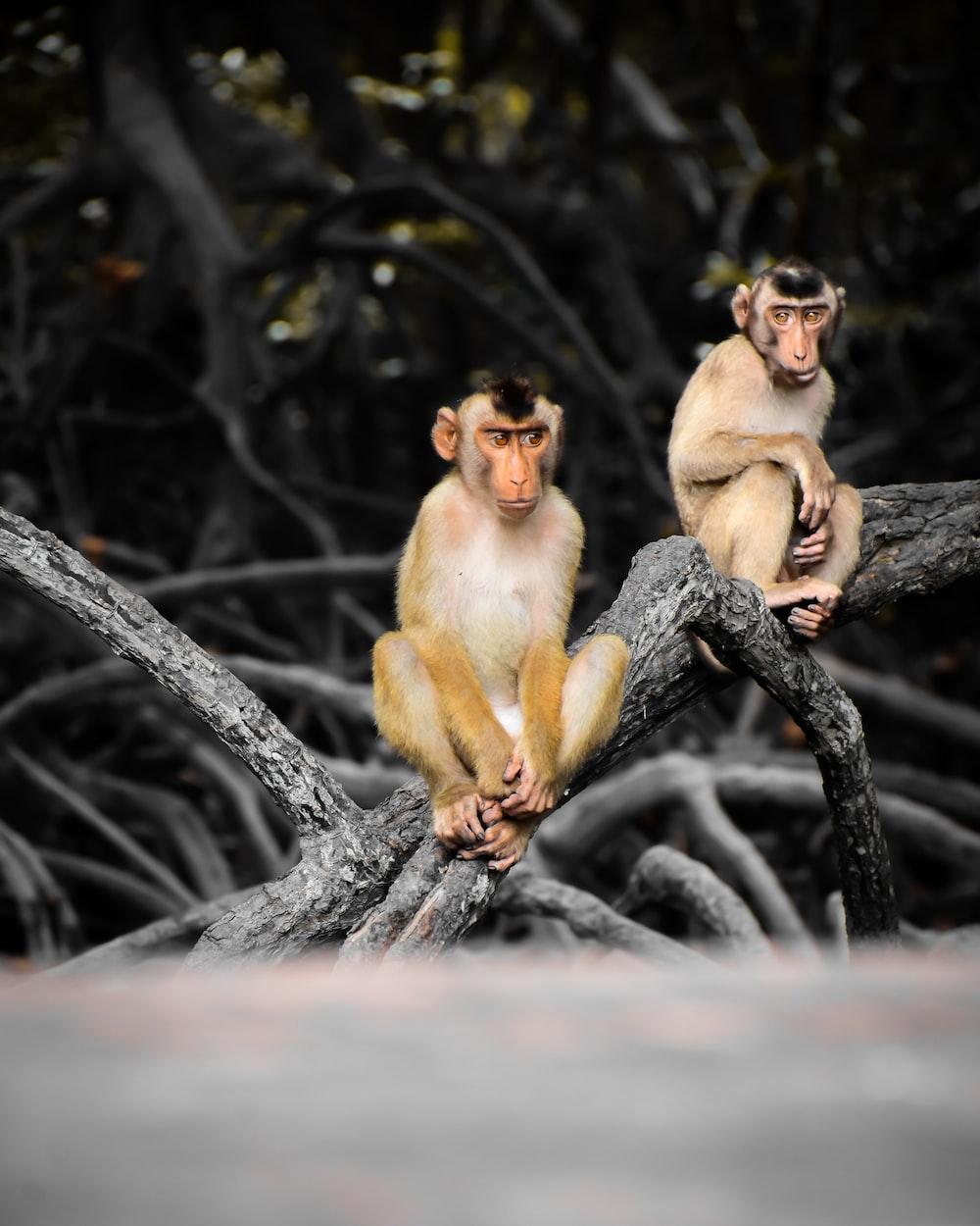 brown monkey on black tree branch