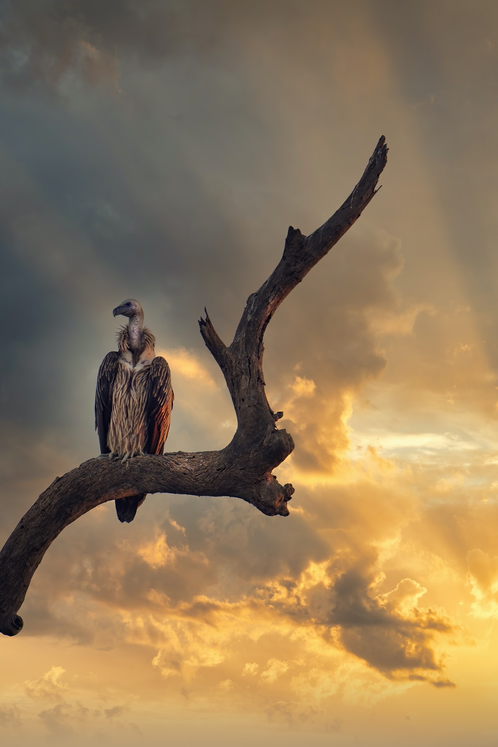gray and white bird on brown tree branch during sunset