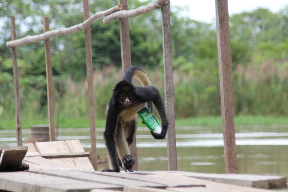 black monkey on brown wooden fence during daytime