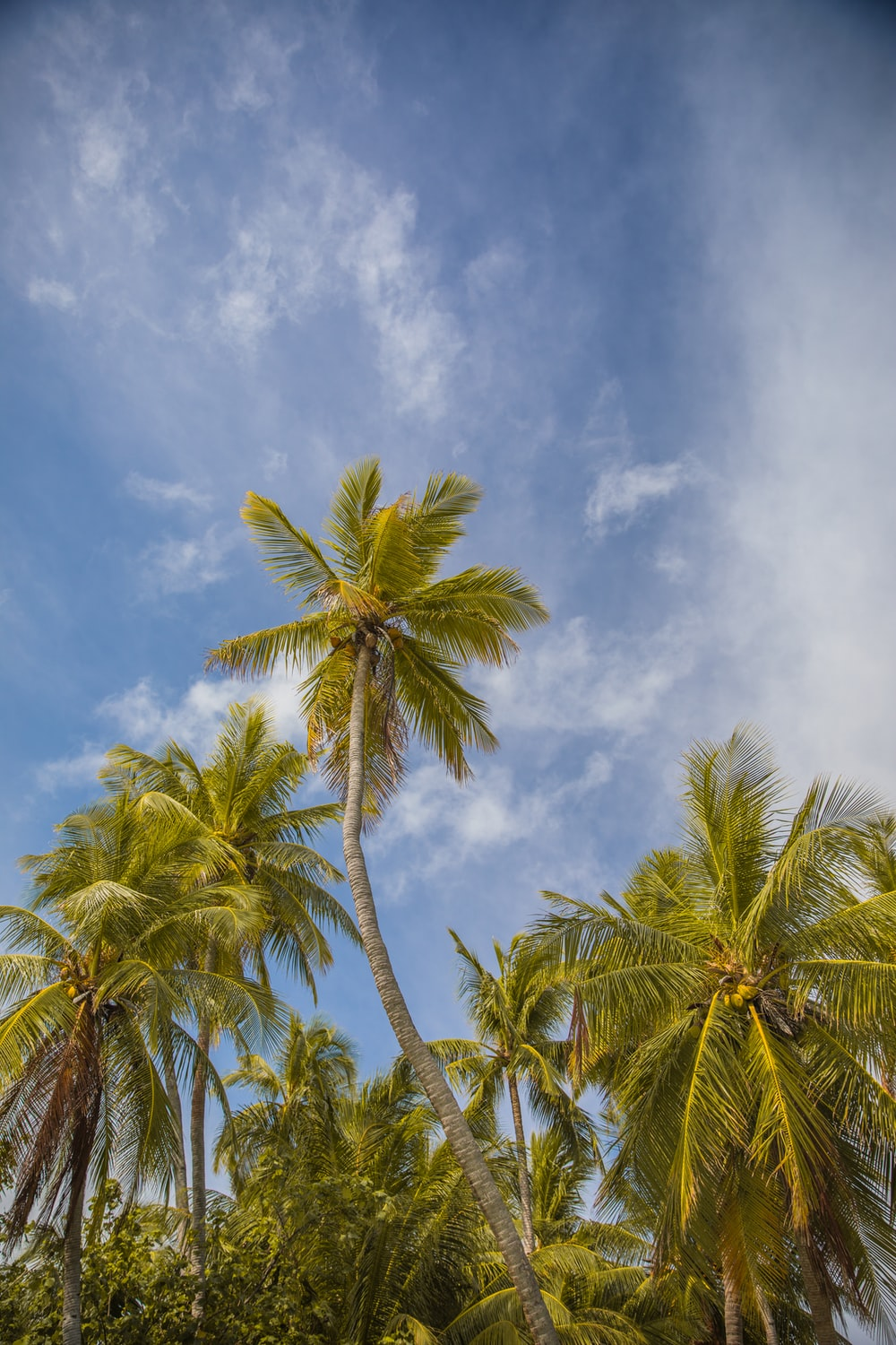 green coconut tree under white clouds and blue sky during daytime