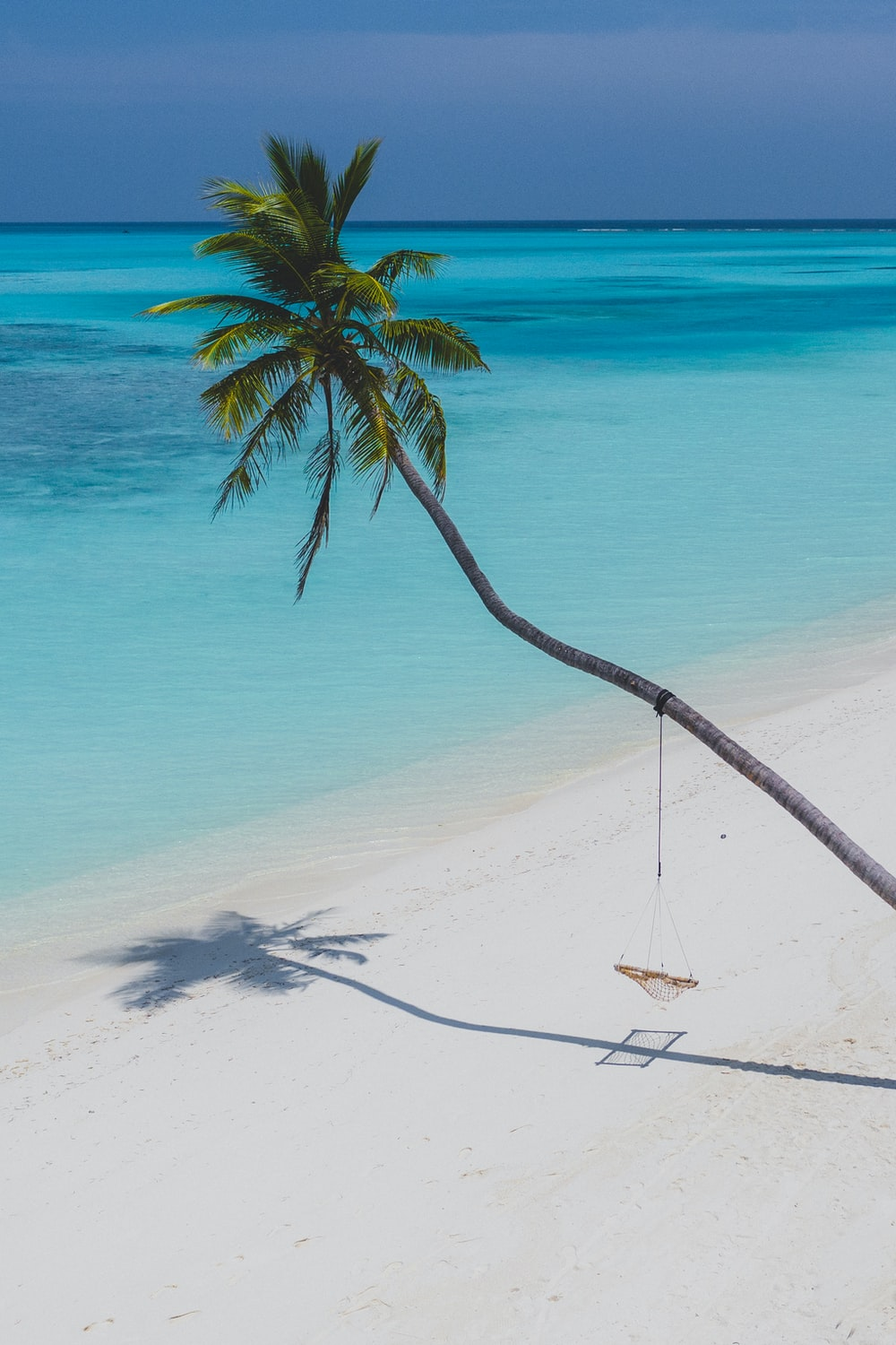 coconut tree on white sand beach during daytime
