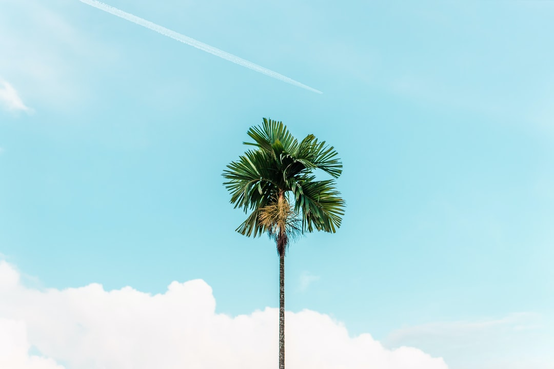 Green Palm Tree Under Blue Sky During Daytime - unsplash