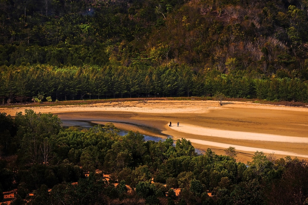green trees near brown sand during daytime