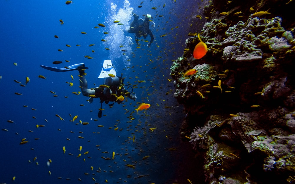 man in black wet suit diving on water with school of fish