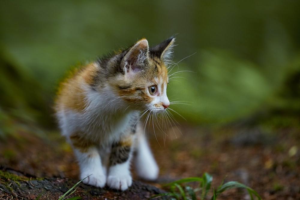 white orange and black cat on ground