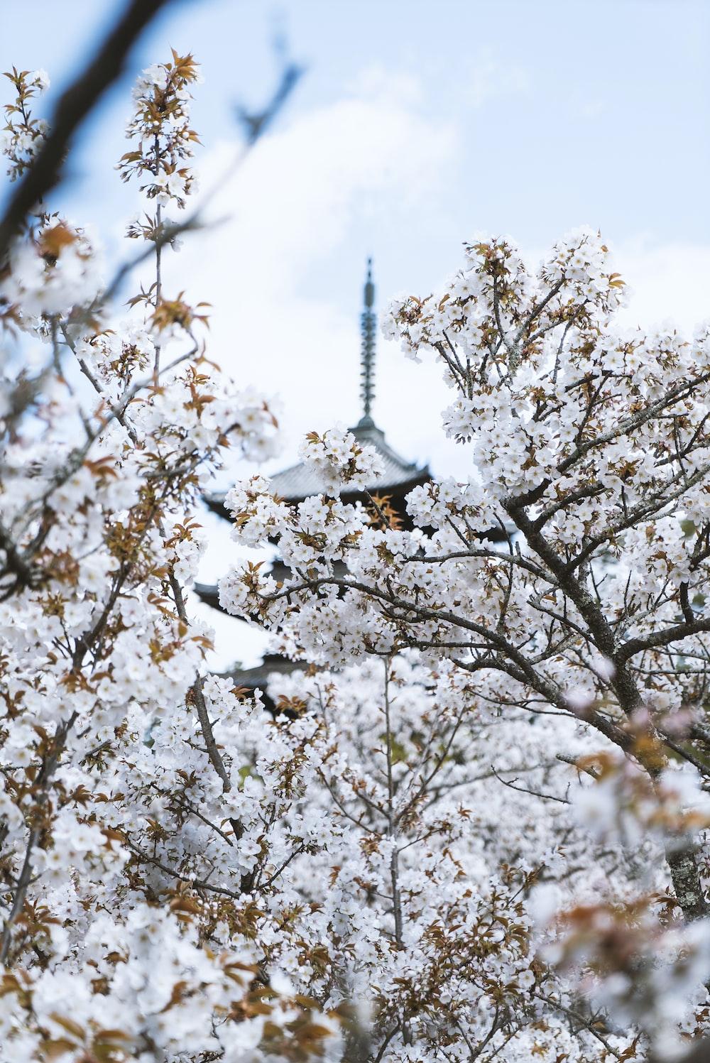 white cherry blossom tree under blue sky during daytime