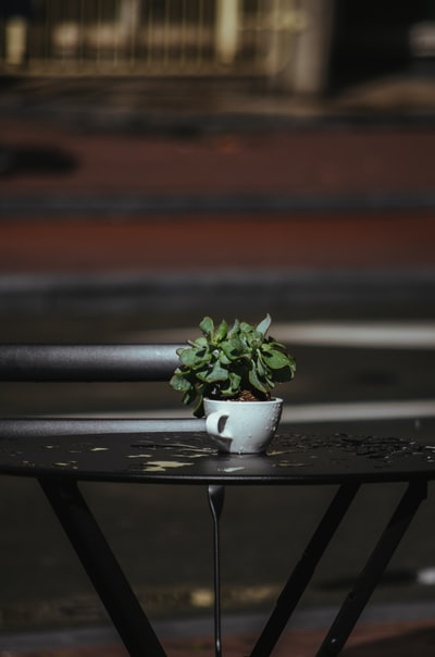 green plant on white ceramic pot on black metal table