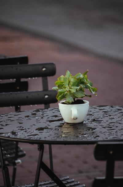 green plant on white ceramic pot on black wooden table