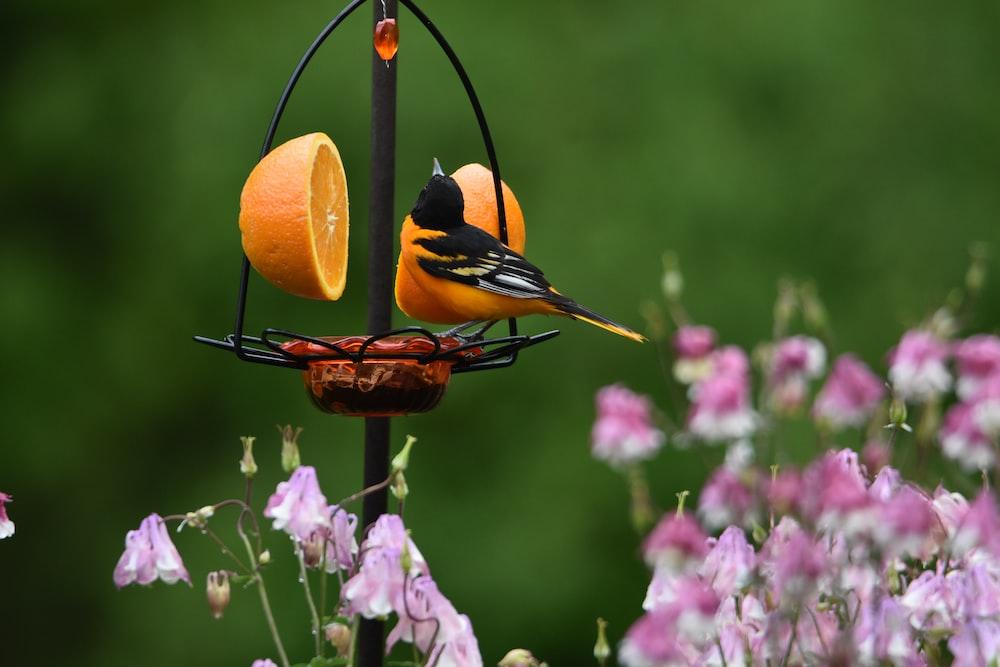 orange and black butterfly on purple flower