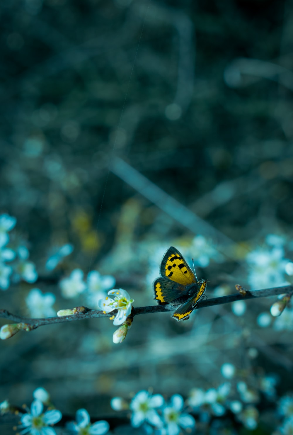 yellow and black butterfly perched on brown stem in tilt shift lens