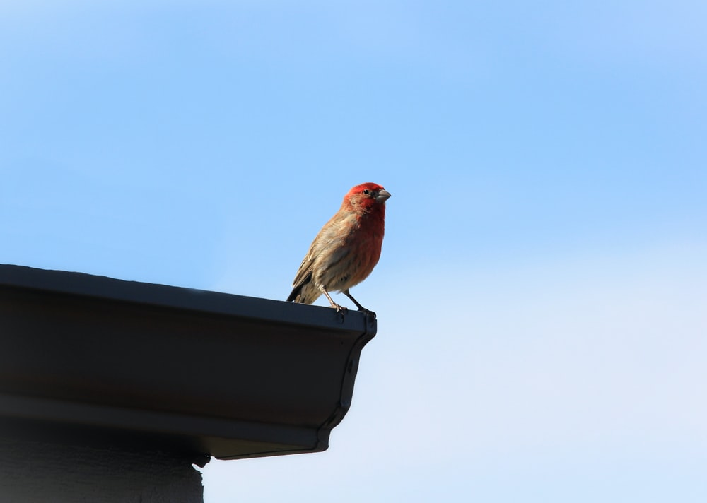 red and brown bird on brown wooden roof during daytime