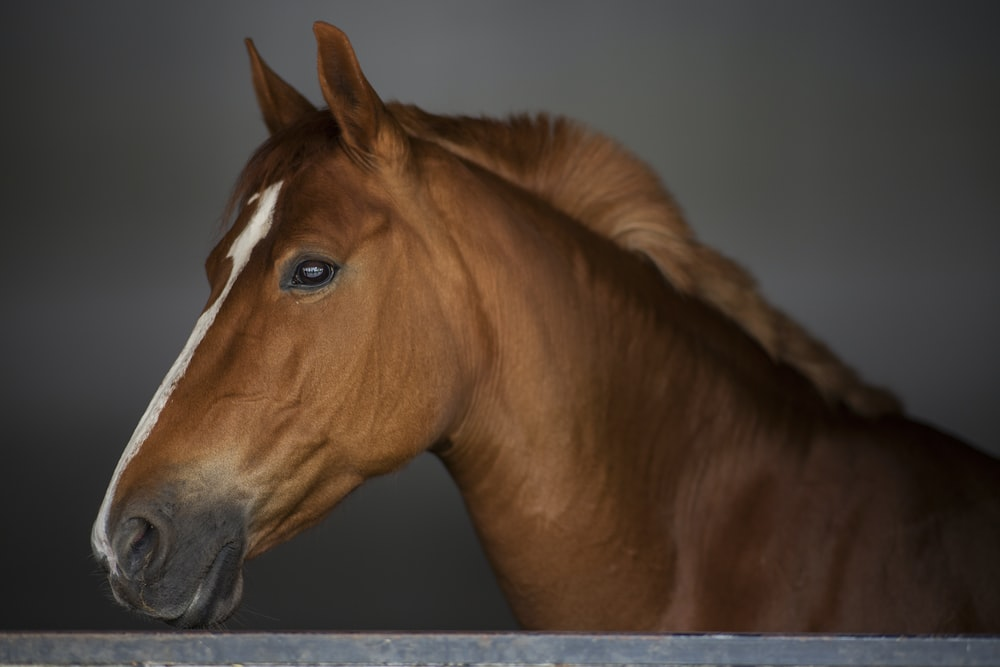 brown horse in close up photography