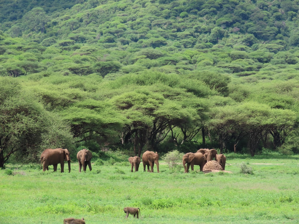herd of elephant on green grass field during daytime