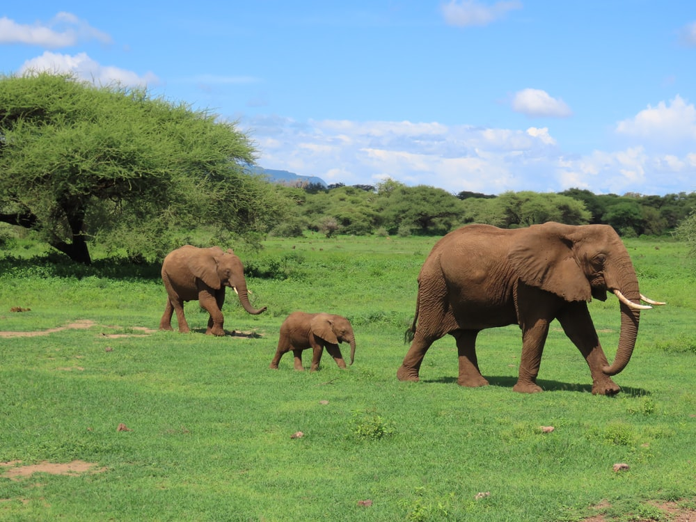 brown elephants on green grass field during daytime