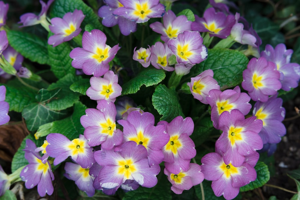 purple and white flowers with green leaves