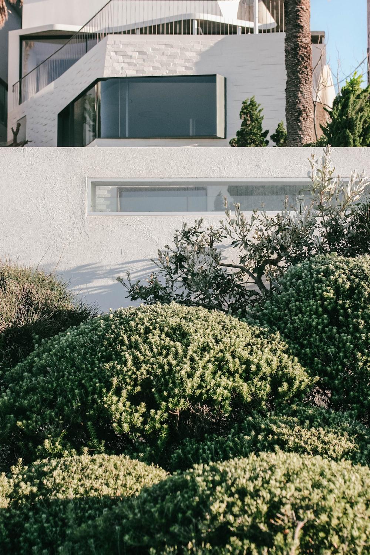 green plant beside white concrete house