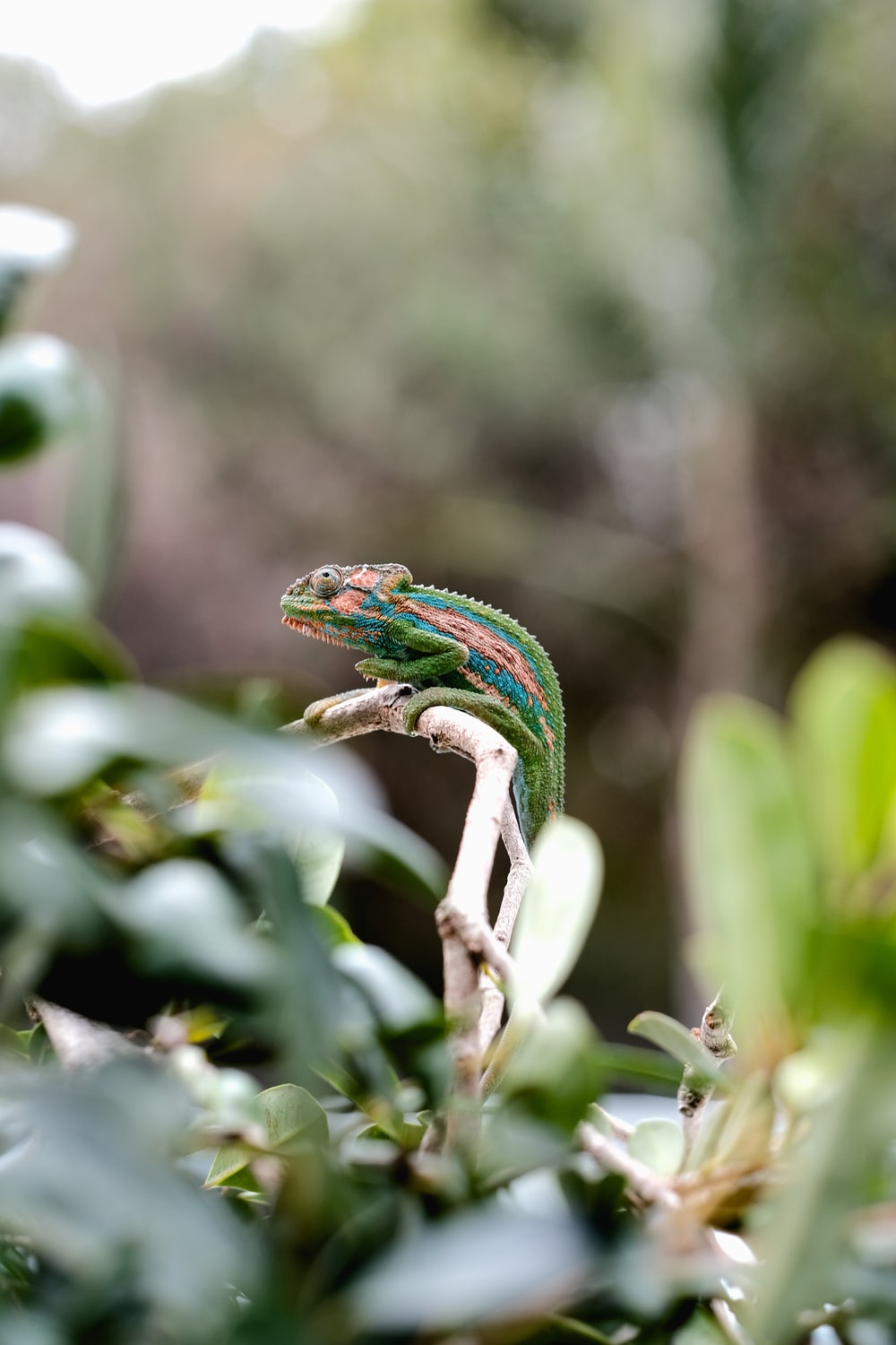 green and brown lizard on tree branch