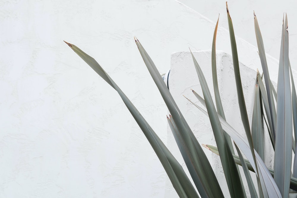 green plant on white wall