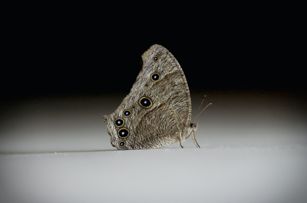 brown and white moth on white surface