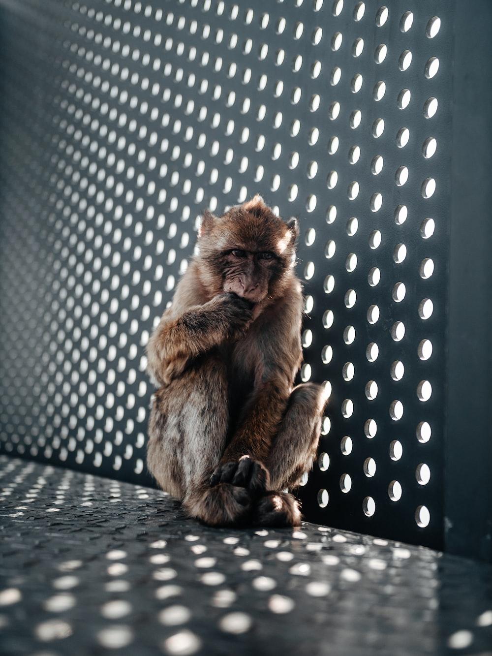 brown monkey on black metal fence