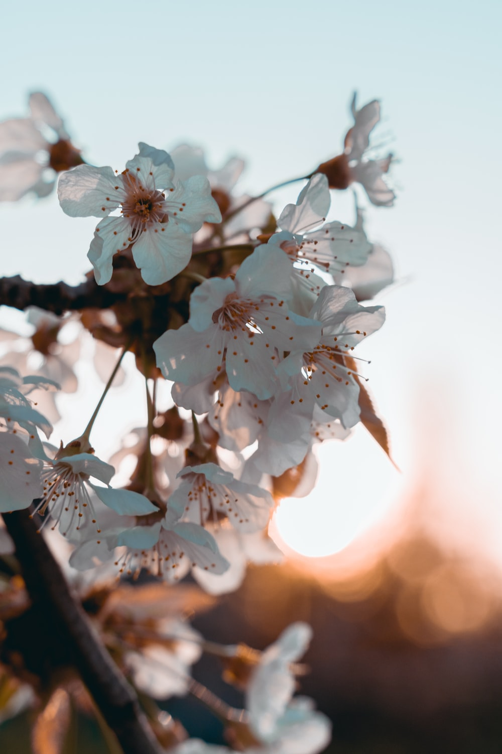 white cherry blossom in close up photography during daytime