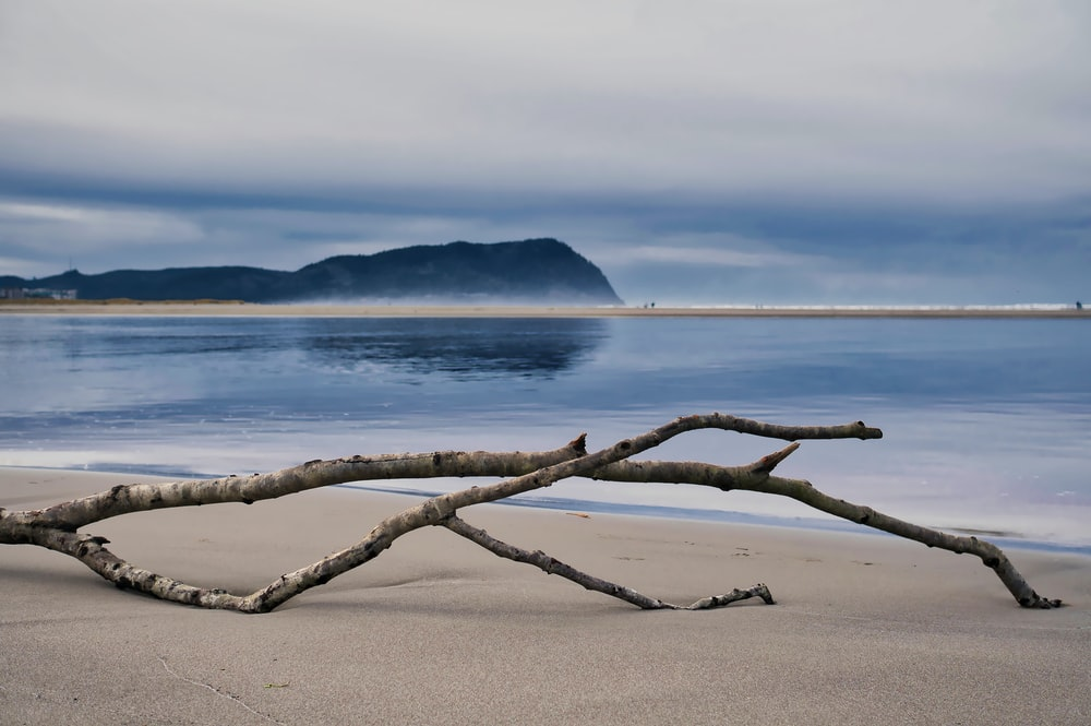 brown tree branch on beach during daytime