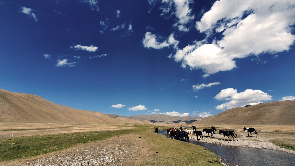 people riding horses on brown field under blue sky and white clouds during daytime