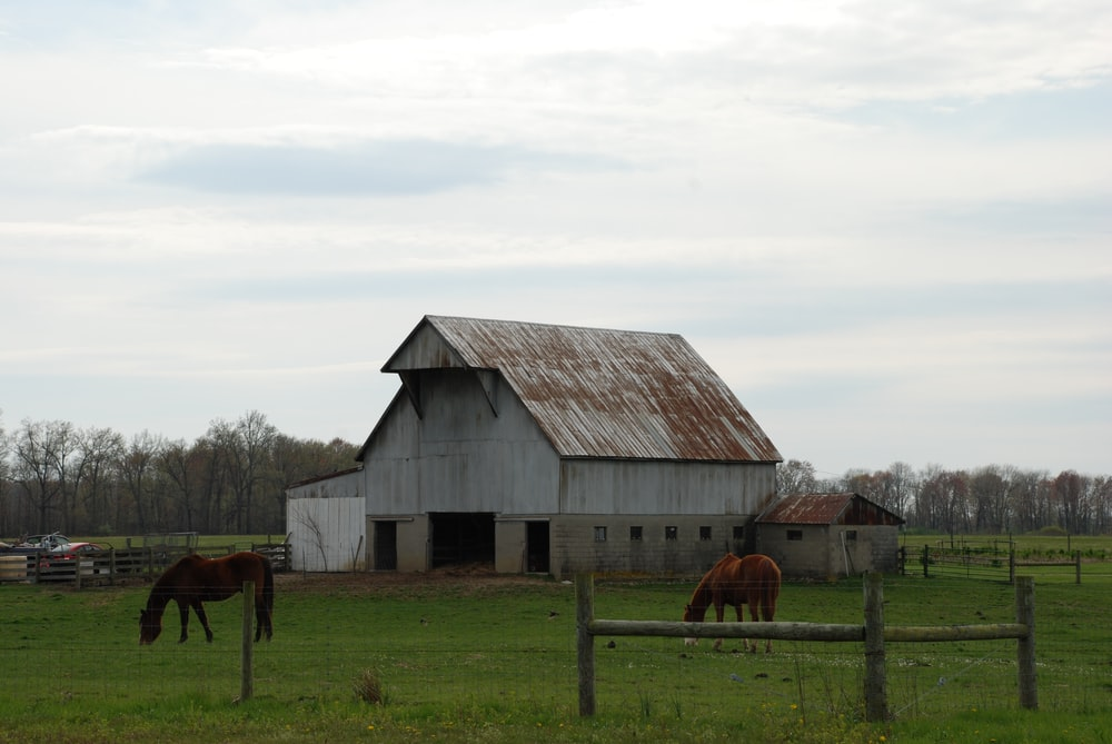 brown horse on green grass field near brown wooden barn under white clouds during daytime