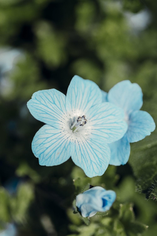 blue flower in tilt shift lens