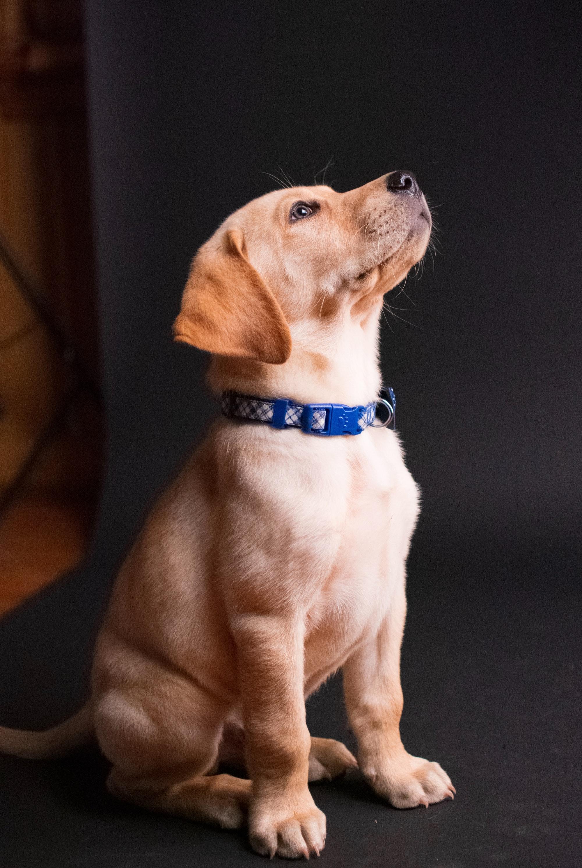Quale attrezzatura avere per iniziare lezioni di obbedienza con il proprio cane