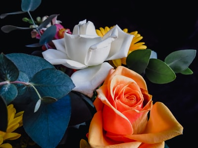 white and yellow rose in bloom mother's day teams background