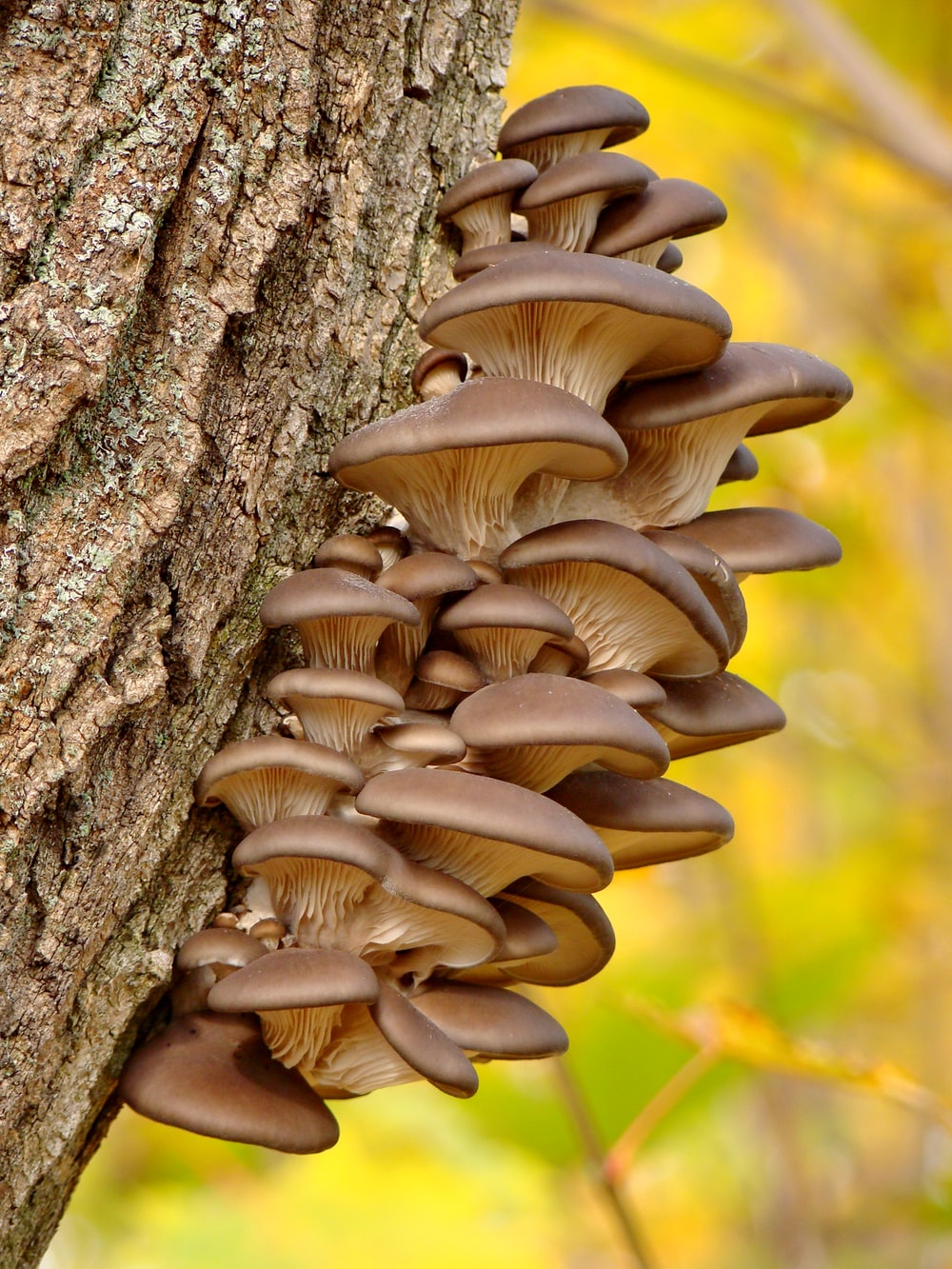 brown mushroom on brown tree trunk