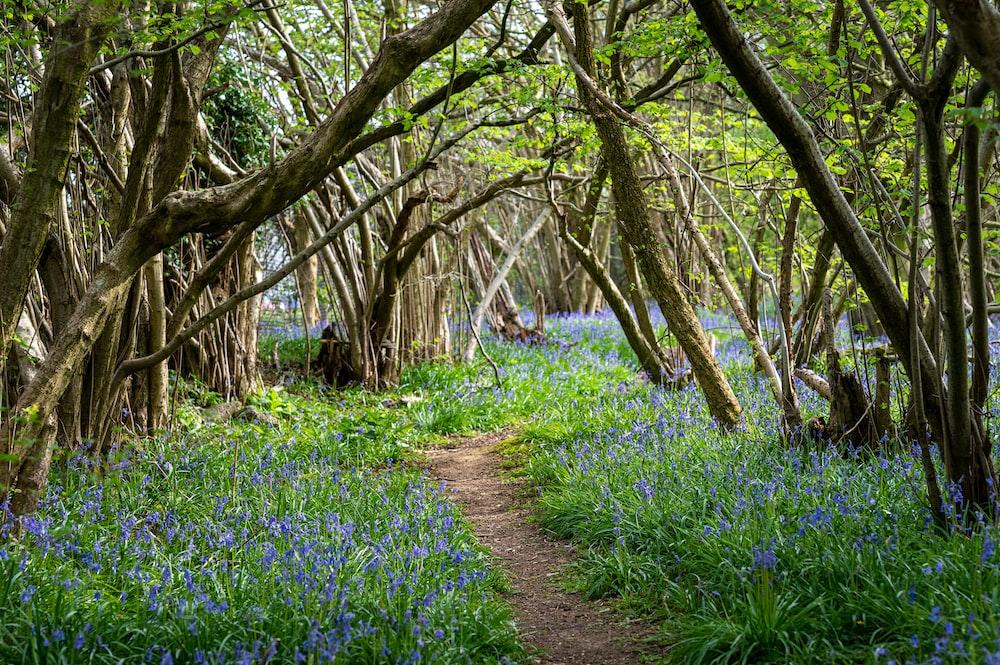blue flower field under brown tree during daytime