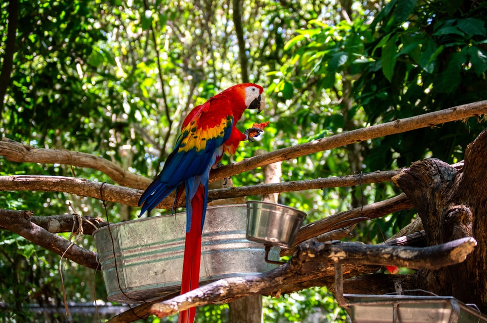 red yellow and blue parrot on brown wooden stick