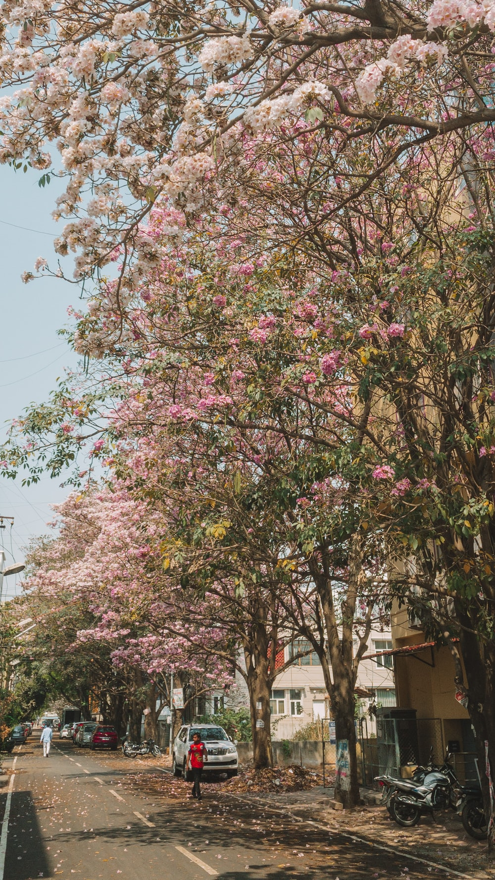 pink and white flower tree
