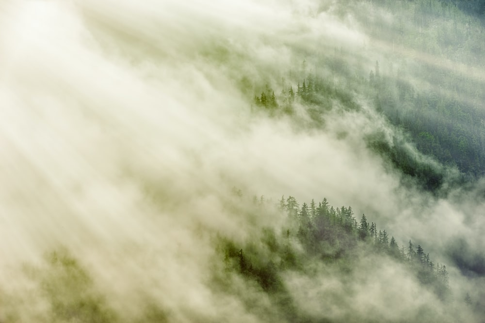 green trees under white clouds