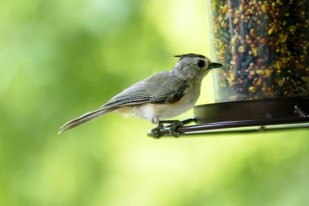 gray and white bird on brown metal bar