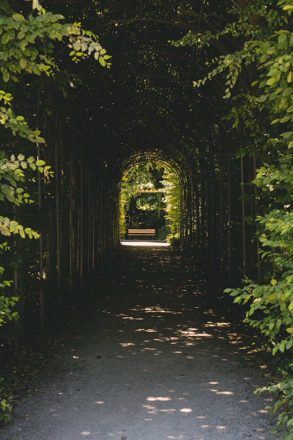 green plants on pathway during daytime