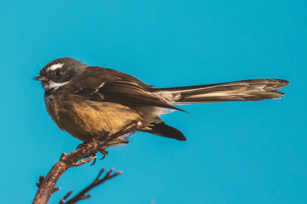 brown and black bird on brown tree branch during daytime